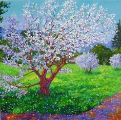 'Almond Trees at Cuesta Park' - by Patricia Musgrave. Spring Time, Woodland, Almond, Bloom, Photo And Video, Park, Artist, Nature, Flowers