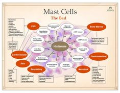 Mast Cell Activation Syndrome refers to a group of disorders with diverse causes with most people suffering from chronic and recurrent inflammation. Histamine Intolerance Symptoms, Food Intolerance, High Histamine Foods, White Blood Cell Count, White Blood Cells, Mast Cell Activation Syndrome, Irritable Bowel Syndrome, Autoimmune Disease, Lyme Disease