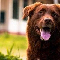 #dogalize Hipo en perros: una afección común en caninos #dogs #cats #pets