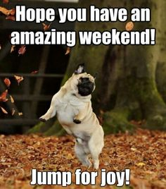 1000+ images about ♦ Have a Great Weekend ♦ on Pinterest | Happy weekend, Weekend quotes and ...