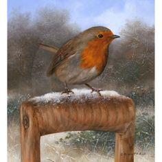 carl whitfield - robin on a garden spade wildlife print