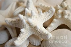 White Starfish by Andrea Anderegg
