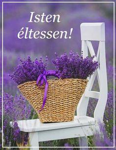 Happy Saturday, Picnic, Happy Birthday, Basket, Romantic, Purple, Roses, Happy Brithday, Urari La Multi Ani