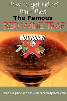 Find out about this fruit fly eliminating method and many more in our full guide! Fruit Flies, Fly Traps, How To Get Rid, Pest Control, Red Wine, Homemade, Tips, Home Made, Bed Bugs Treatment
