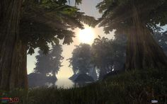 Streaming sun, reaching / between thick, vibrant leaves to / welcome the new day. -christiestratos #haiku #morrowind #elderscrolls
