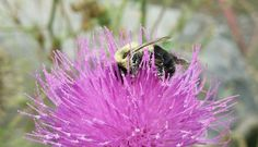 """Photo """"OverTheTop"""" by TJ-Victoria Insects, Victoria, Inspirational, Plants, Art, Flora, Kunst, Plant, Inspiration"""