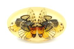 Märta Mattsson, Brooch: Rorschach 2013, Wings from butterfly, moth and cicada, resin, silver, 11 x 6 x 2 cm