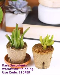How to take care bendy gollum leaves. Get your rare succulents houseplants online. Worldwide shipping. Use Discount code: E10PER We bring joy to your home gardening experience.