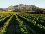 Ohhh Wine Country of South Africa, How I wish I was back there. Visit South Africa, Cape Town South Africa, South African Wine, Tourist Office, Travel Tours, Fauna, Wine Country, Vineyard, Places To Go