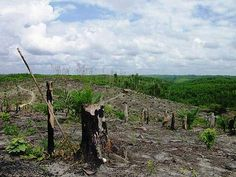 deforestation - Google Search