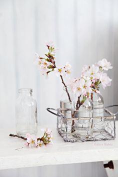 Sakura・Cherry Tree