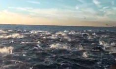 WOW!  A pod of over 2,000 dolphins off the coast of Dana Point California!!!  Amazing!!1 o.O