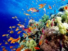 The iconic Great Barrier Reef is blessed with the breathtaking beauty of the world's largest coral reef. #Australia
