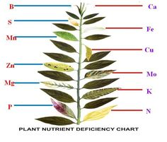 Great chart indicating potential nutrient deficiencies with plants