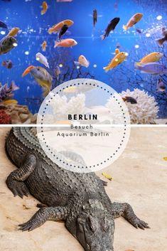 Städtetrip Berlin - Berlin mit Kindern - Berlin Tipp bei Regen Besuch im Aquarium Aquarium, Animals, Amphibians, Rain, Germany, Goldfish Bowl, Aquarius, Animaux, Animal