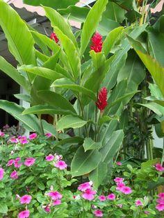 Gartenpflanzen  gartenpflanzen ideen exotische pflanzen exotische gartenpflanzen ...