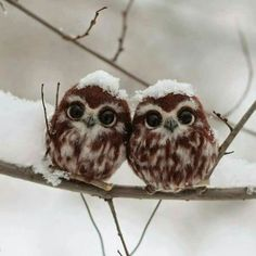 Beauty Owls fb