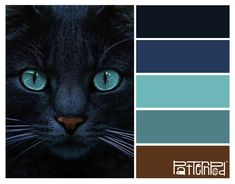 Black cat #patternpod #patternpodcolor #color