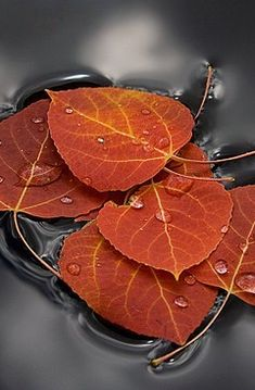 Autumn ~ Leaves