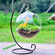 New Hanging Glass Plants Flower Vase Hydroponic Container Garden  Decoration