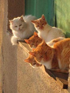 fila di gatti curiosi