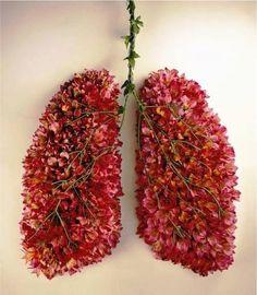 pulmones floresciendo1 Example of what not to do