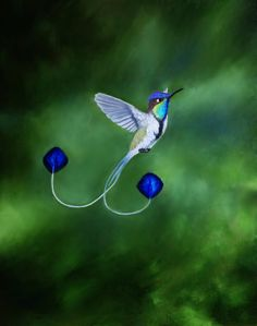 Marvellous spatuletail hummingbird | Marvelous Spatuletail Hummingbird by PaintedKelpie                                                                                                                                                                                 もっと見る
