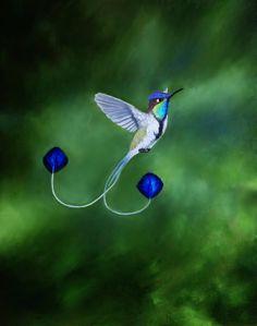 Marvellous spatuletail hummingbird | Marvelous Spatuletail Hummingbird by PaintedKelpie