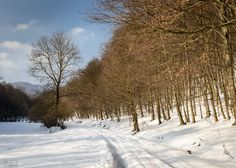 Small Carpathian Mountains Carpathian Mountains, Snow, Nature, Outdoor, Outdoors, Naturaleza, Outdoor Games, Nature Illustration, The Great Outdoors