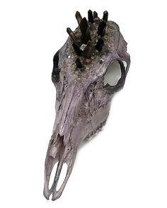 Deer Skull Doe Skull Taxidermy Real Animal by KristenJarvisART