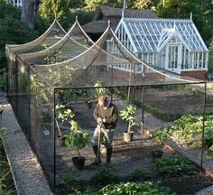 urban gardening - Fruit cage Protects against some kinds of pests that might steal the fruit Garden Trees Potager garden, Garden, Garden trees Potager Garden, Veg Garden, Vegetable Garden Design, Greenhouse Gardening, Fruit Garden, Garden Trees, Greenhouse Ideas, Simple Greenhouse, Vegetable Gardening