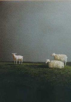 Drie schapen. Ontwerp: Michael Sowa. Postkaart te bestellen bij www.postersquare.com