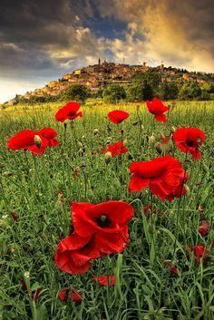 Poppy Field, Umbria, Italy photo by maurizio