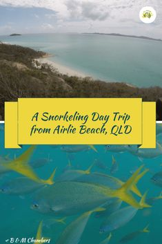 Going snorkeling when visiting Airlie Beach is a must.