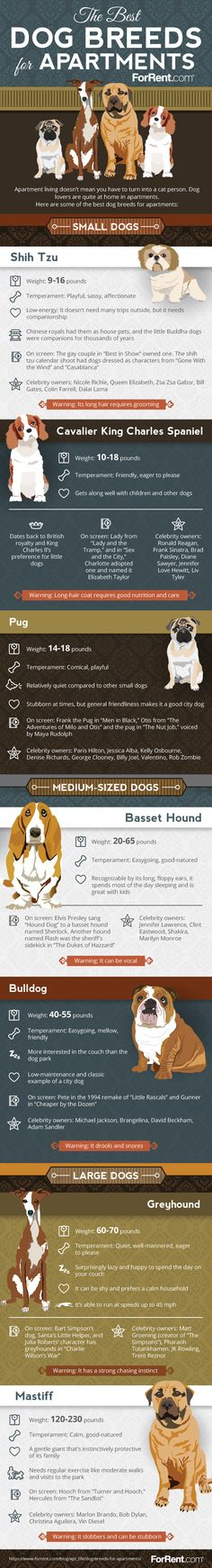The Best Dog Breeds for Apartments