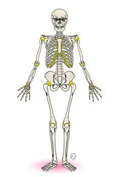 Education, Art, Skeleton, Teaching, Educational Illustrations, Studying