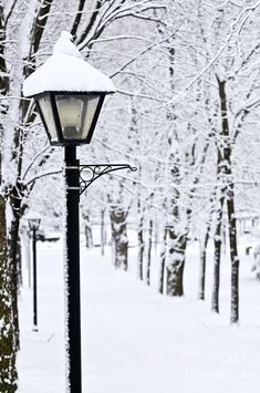 Winter park covered with fresh white snow I Love Snow, I Love Winter, Winter Snow, Winter Time, Winter Christmas, Magical Christmas, Cozy Winter, Winter Colors, Outdoor Christmas