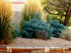 Colorful combo for low water entry. Karl Forester Grass and Dwarf Globe Blue Spruce with gravel surround