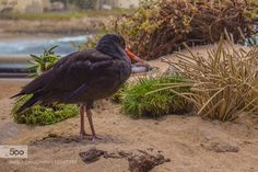 Are you looking at me by SaurabhGoel1. Please Like http://fb.me/go4photos and Follow @go4fotos Thank You. :-)