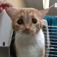 They Take a Chance on Cat Who No One Wanted Because He's Special, Now 2 Months Later...