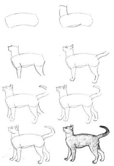 Stepwise drawing of a Cat