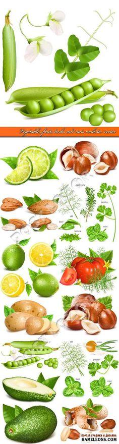Zöldségek, gyümölcsök, gyógynövények és dió, fehér alapon vektor | Zöldség gyümölcs fűszerek és diófélék vektor