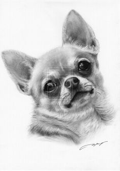 Full Drill Square Diy Diamond Painting Chihuahua dog Diamond Embroidery Cross Stitch rhinestones paintings by number Chihuahua Tattoo, Chihuahua Puppies, Chihuahuas, Animal Drawings, Art Drawings, Dachshund, Animal Coloring Pages, Cross Paintings, Dog Portraits