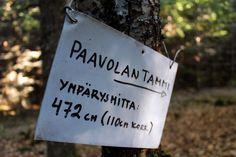 Suomi Tour: Paavolan tammi