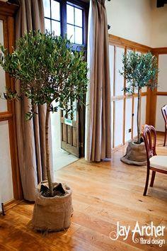 Olive trees in jutte