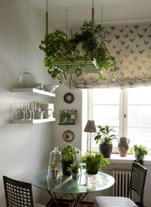 Shade tolerant herbs in rack