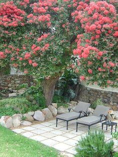 designs for small gardens and patios - Google Search