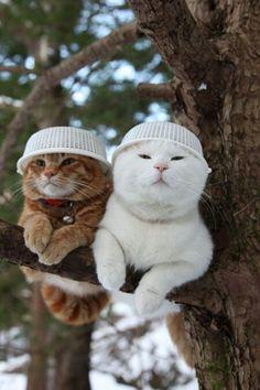 개 고양이 강아지 캣 독 도그 온라인 어플 바카라 카지노 afs36★㏇m
