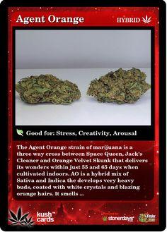 Agent Orange | Repined By 5280mosli.com | Organic Cannabis College | Top Shelf Marijuana | High Quality Shatter