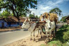 Village Photography, Art Photography, Travel Photography, Bullock Cart, Kerala Backwaters, Punjabi Culture, Farm Business, Rural India, Indian Village